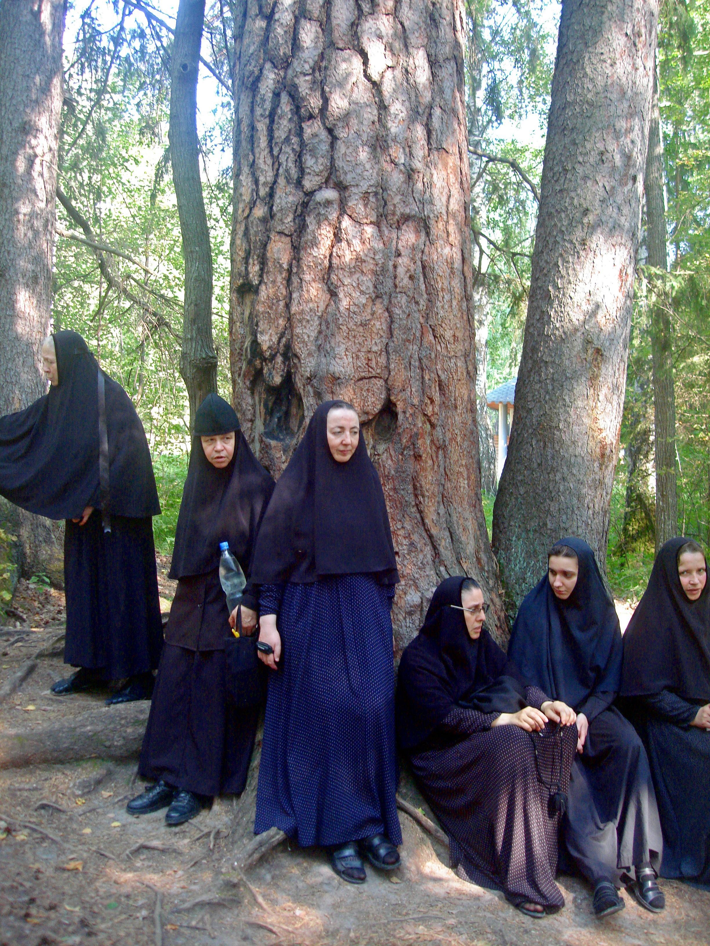 В древнем Серафимовском лесу