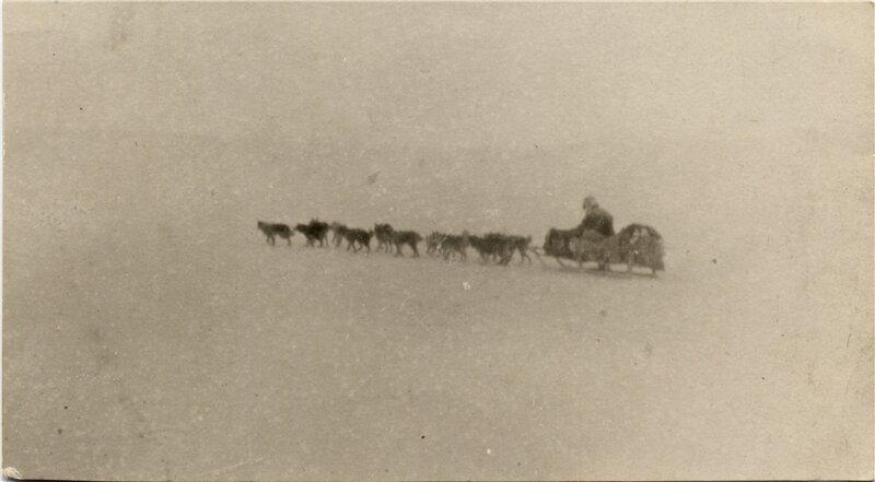 Rider on a dog sled at the Cape Shalaurov research station, Bolshoi Lyakhovsky Island, Siberia, 1935-36.