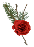 CR_ASTIC Flower 2.png