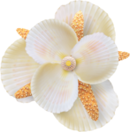 NLD Shell flower 2.png