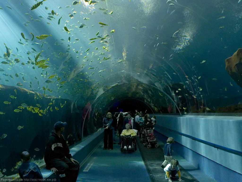Georgia Aquarium Ocean Voyager Tunnel