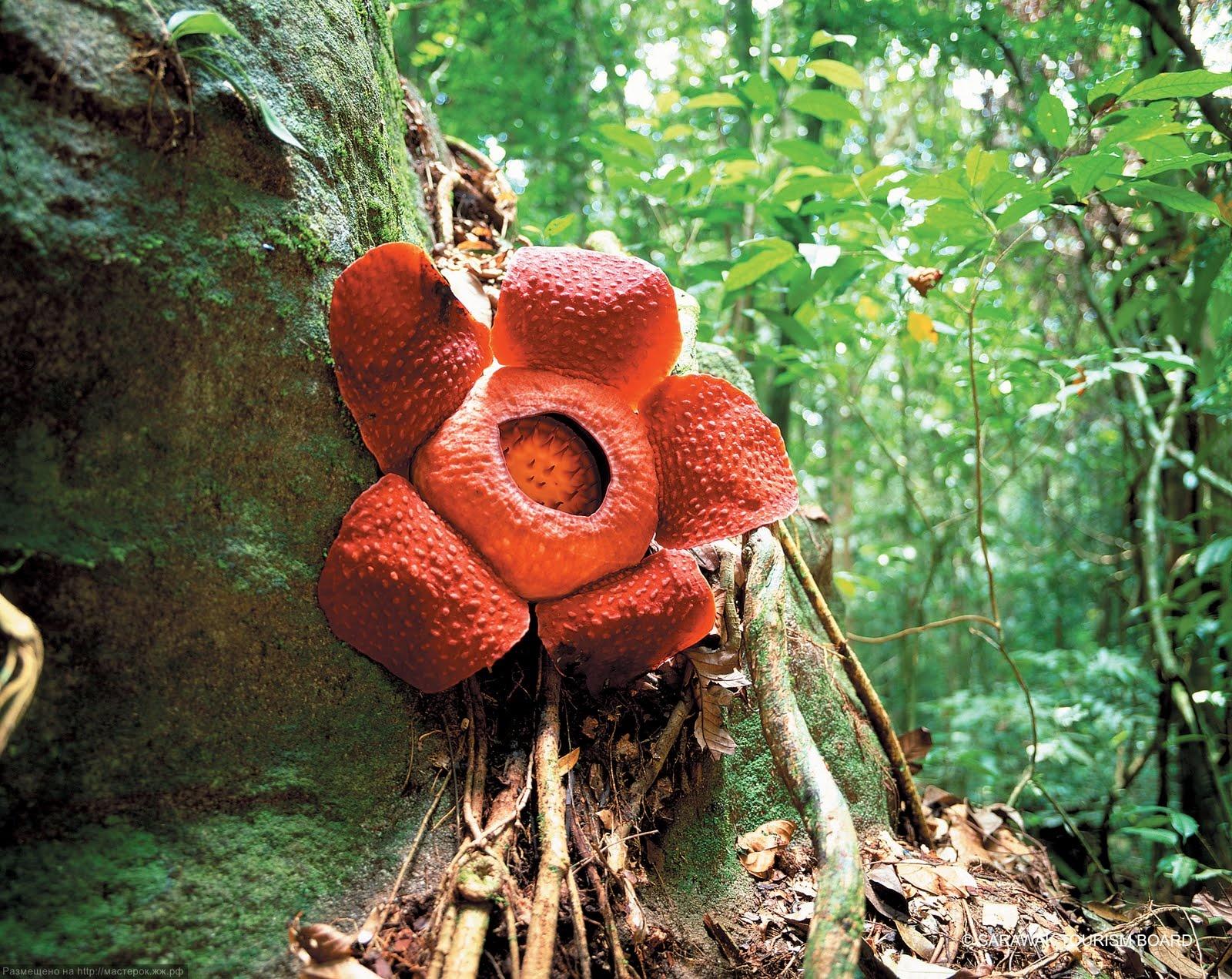 Строение цветка и его развитие