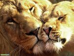 1266323350_animals_love-2.jpg