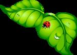 листья с коробочкой.png