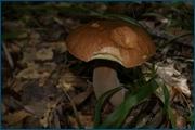 http://img-fotki.yandex.ru/get/6609/15842935.146/0_d0c83_56e6d9af_orig.jpg