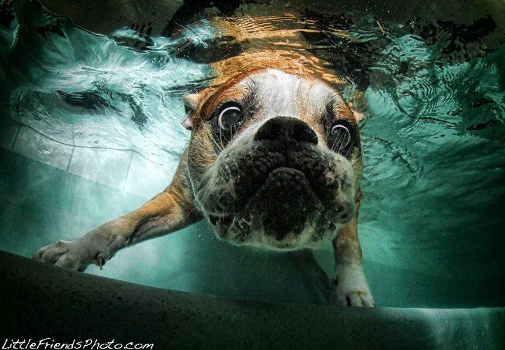 Забавные собаки под водой