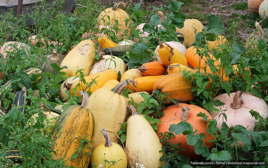 Деревенская осень