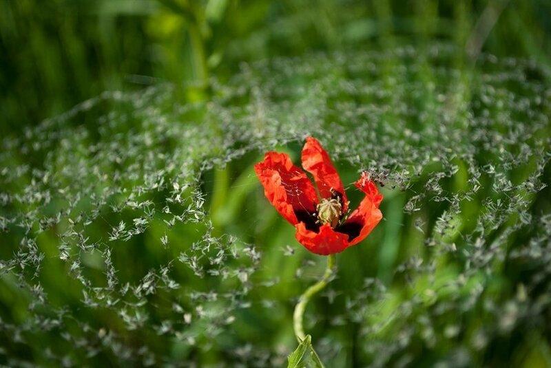 Непостижимая красота дикой природы России. Фотоконкурс National Geographic 0 1b37a0 690c21ff XL