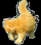 «Рыжий котенок» 0_8c6be_fa60e31a_S