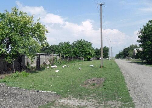 Начало лета, хутор Новонекрасовский, июнь 2012