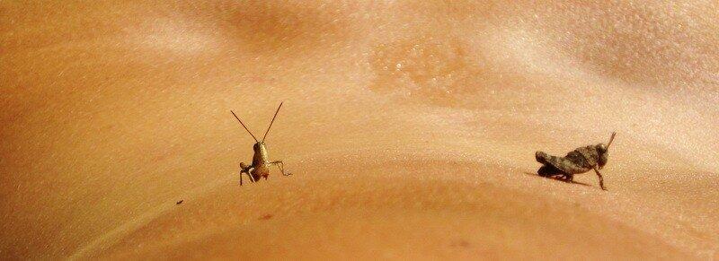 Кузнечики на Марсе