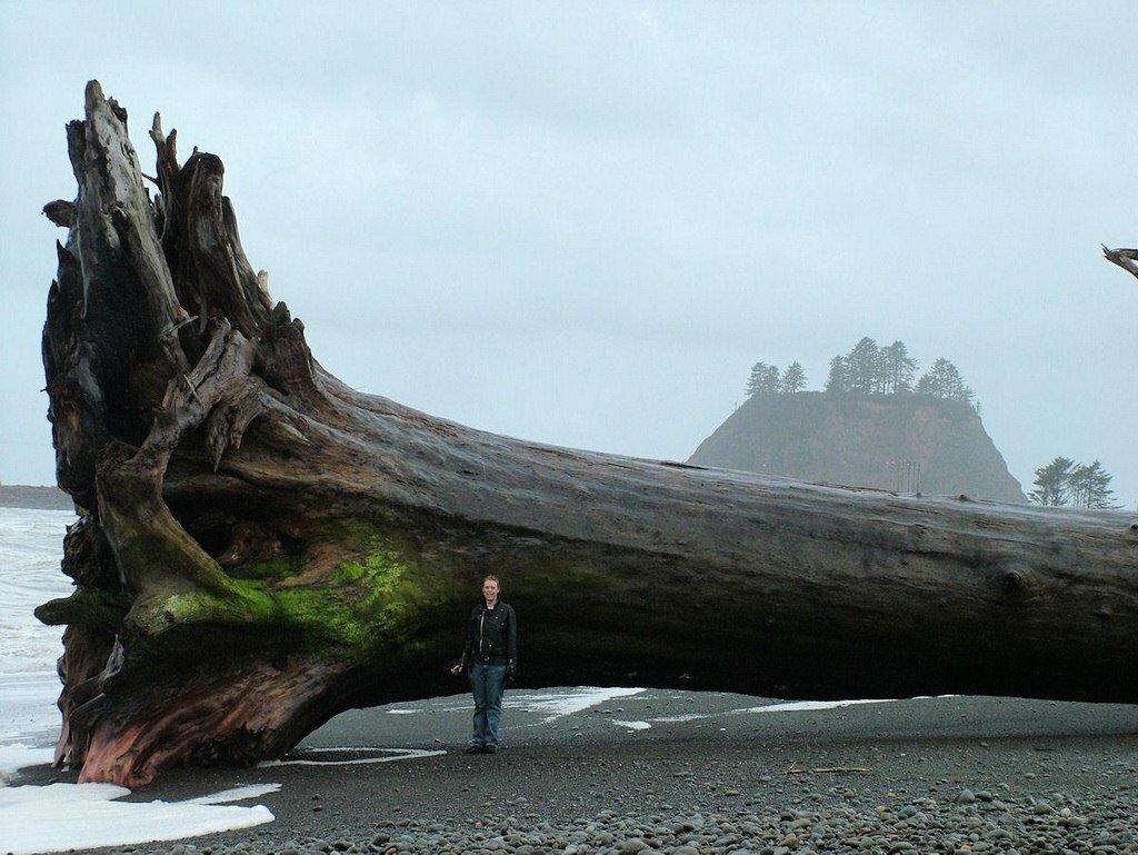 Дерево, которое вымыло на берег пляжа Ла Пуш