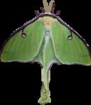 priss_strangebeauty_moth.png