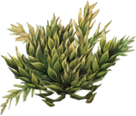 priss_strangebeauty_plants4.png