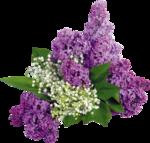 цветы (84).png