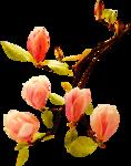 цветы (108).png