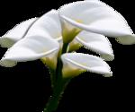 цветы (120).png