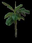 цветы (2).png