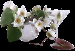 цветы (130).png