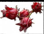 цветы (169).png