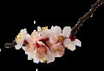 цветы (188).png