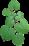 цветы (190).png
