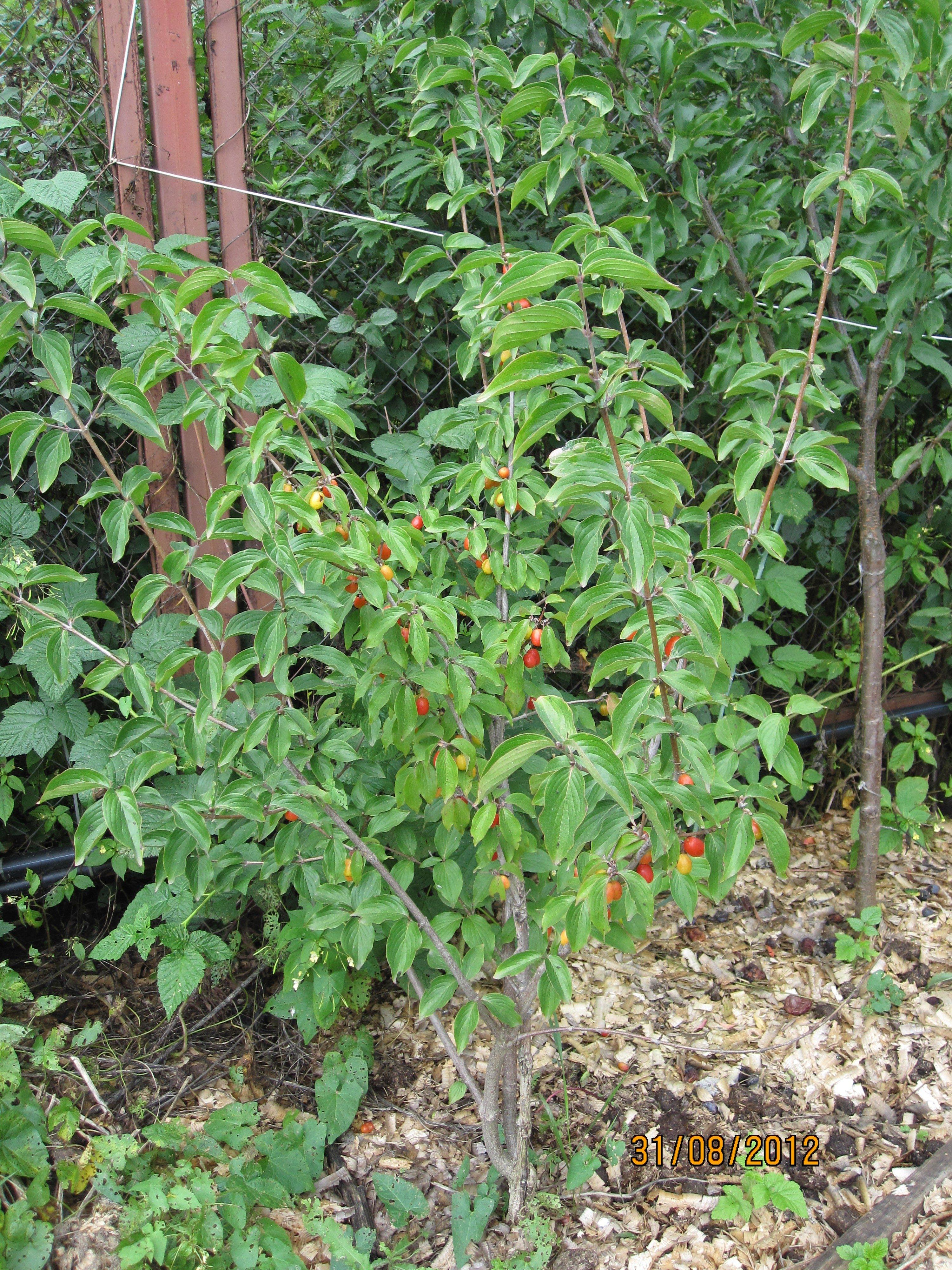 Выращивание винограда в средней 29