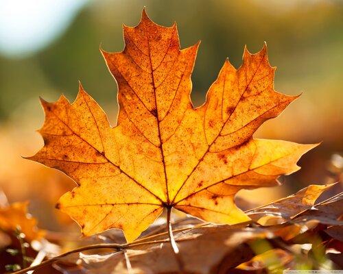 Осень...