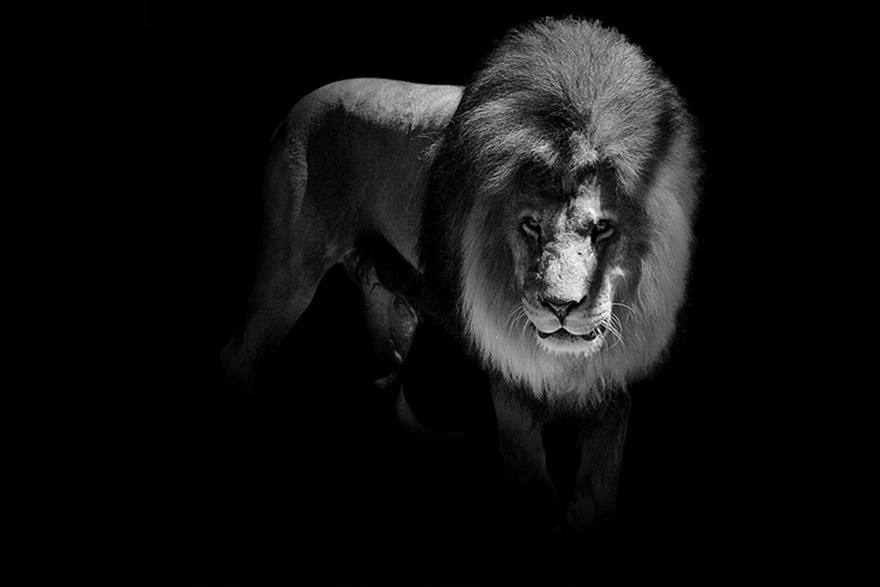 Лукас Холас. Черно белые портреты животных 0 1419c2 c28bcaea orig