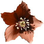 feli_nb_flower4.png