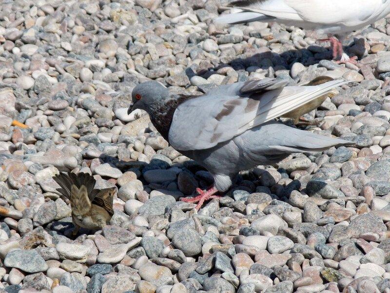 голуби и воробьи пляжа парка победы