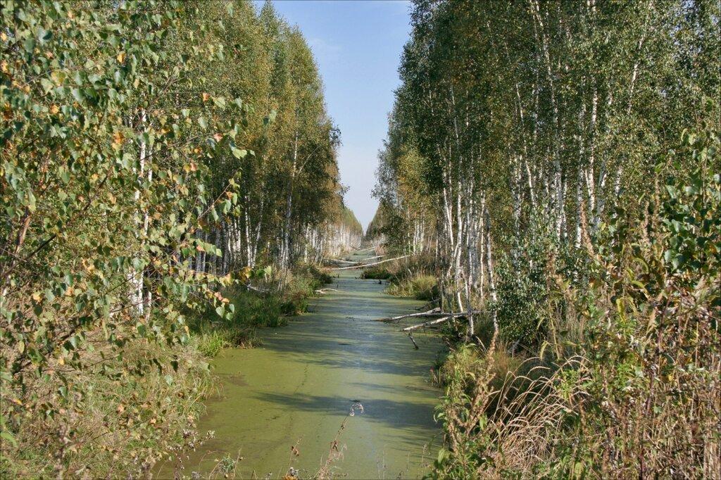 Журавлиная родина, Дубненский болотный массив