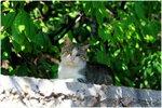 Крымские коты...