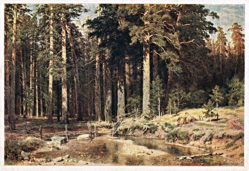 Шишкин И.И. Шишкин. Корабельная роща. 1893 г.