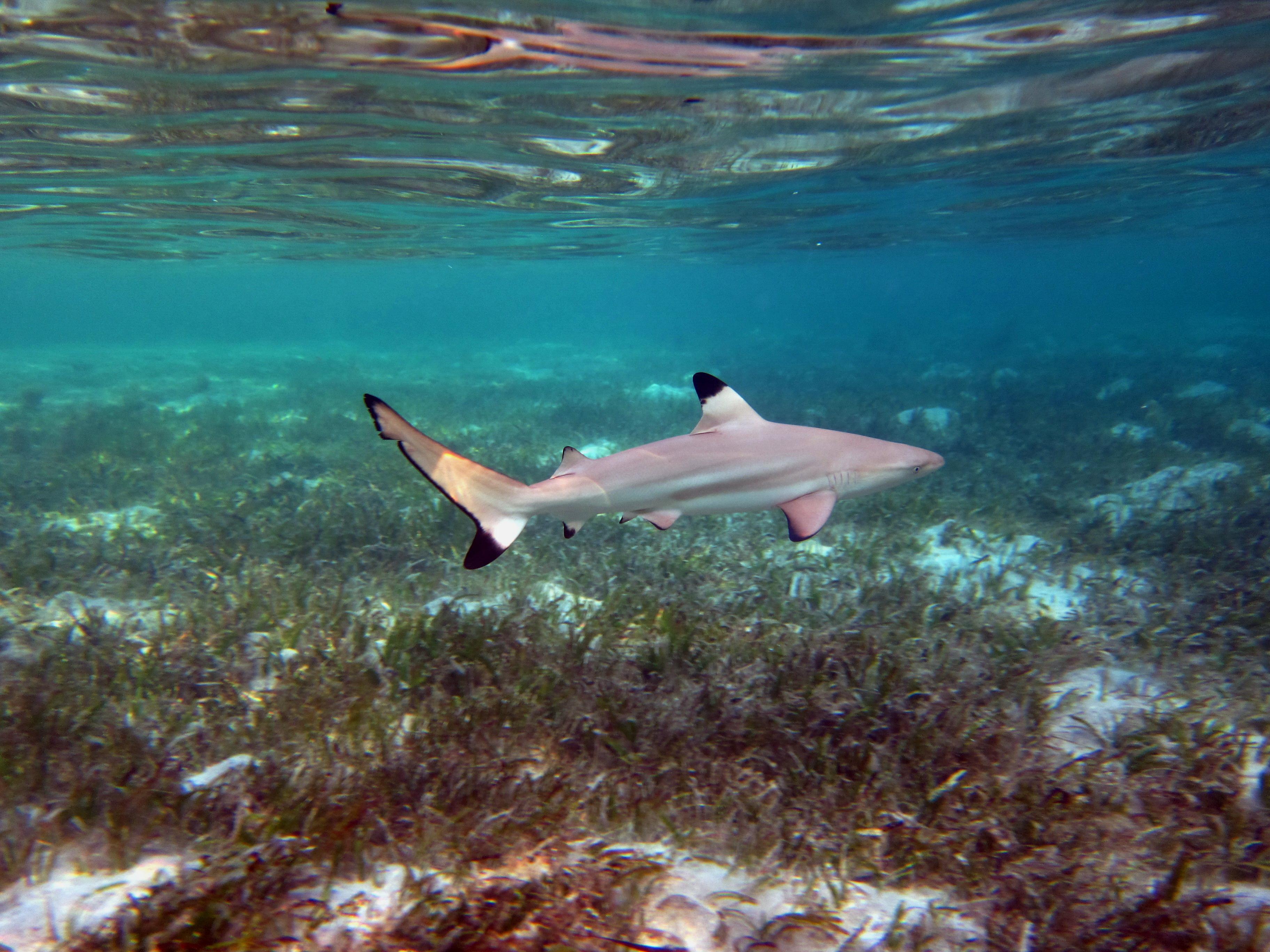 основное египетские акулы фото сразу несколько