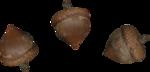acorns48.png