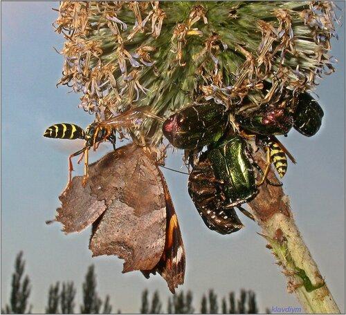 Как много в мире насекомых, друг на друга не похожих!