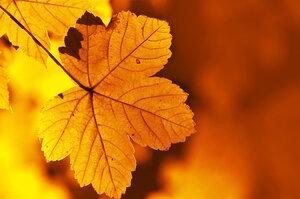 Beauty leaves
