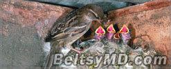Городские птицы нашли применение сигаретным окуркам