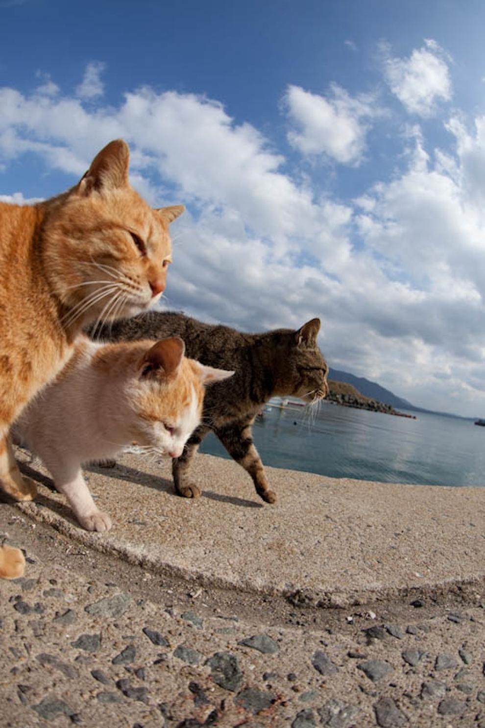 Фото 47 - Кошачий рай в Японии