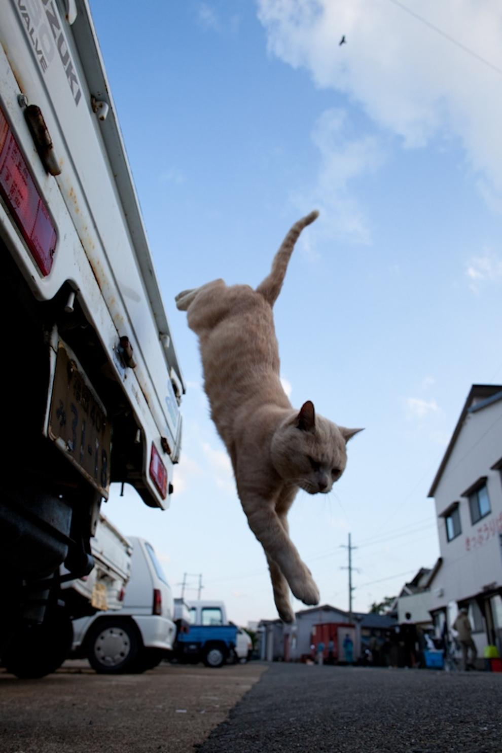 Фото 48 - Кошачий рай в Японии