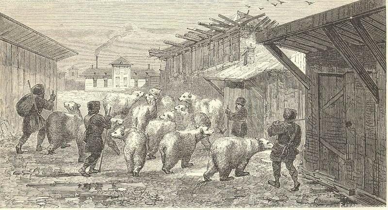 Русские пастухи гонят стадо медведей через деревню - рисунок иностранца побывавшего в России в середине XIX века и позже выпустившего книгу воспоминаний о своём путешествии, 1862 год.jpg