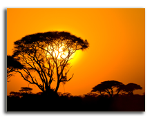 Кения. African sunset in savannah, kenya. Фото javarman - Depositphotos