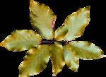 Delph_forestfruits_el14.png