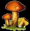 грибы