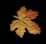 WPD Enchanted Autumn el.26b.png