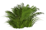 R11 - Nature Time 1 - Fern - 003.png