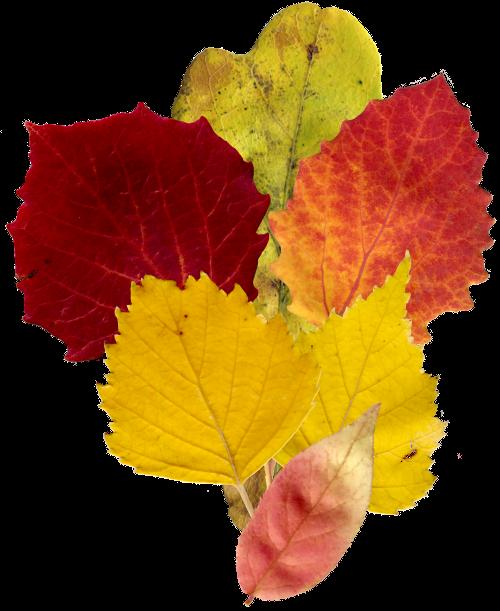 Осенний клипарт для сайтов и блогов