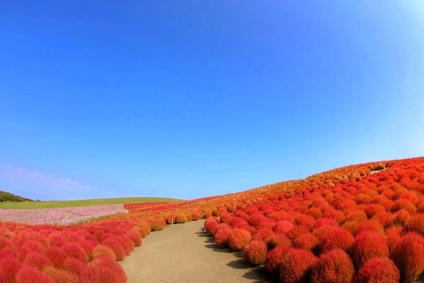 Живописный японский парк Хитати Кайхин 0 1422f4 fe1a5fa5 orig