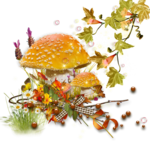 mushroom 12.png